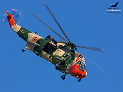 Belgian Sea King Wallpaper